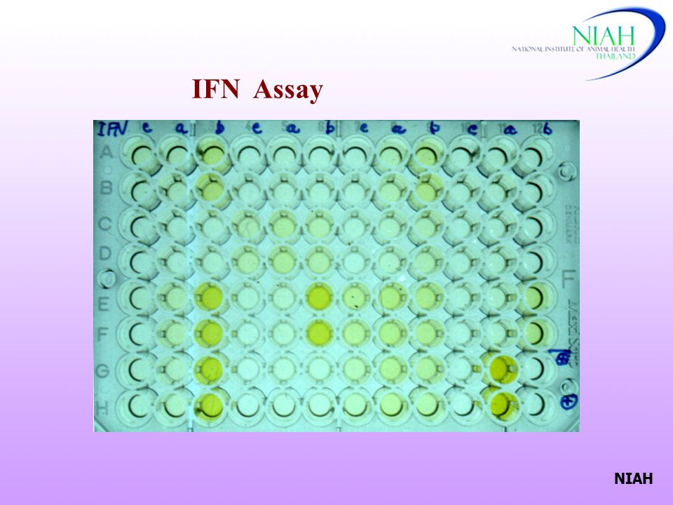 IFN Assay