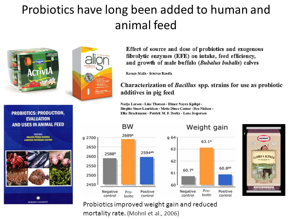 Probiotics have long been added to human and animal feed Probiotics improved weight gain and reduced mortality rate. (Mohnl et al., 2006)