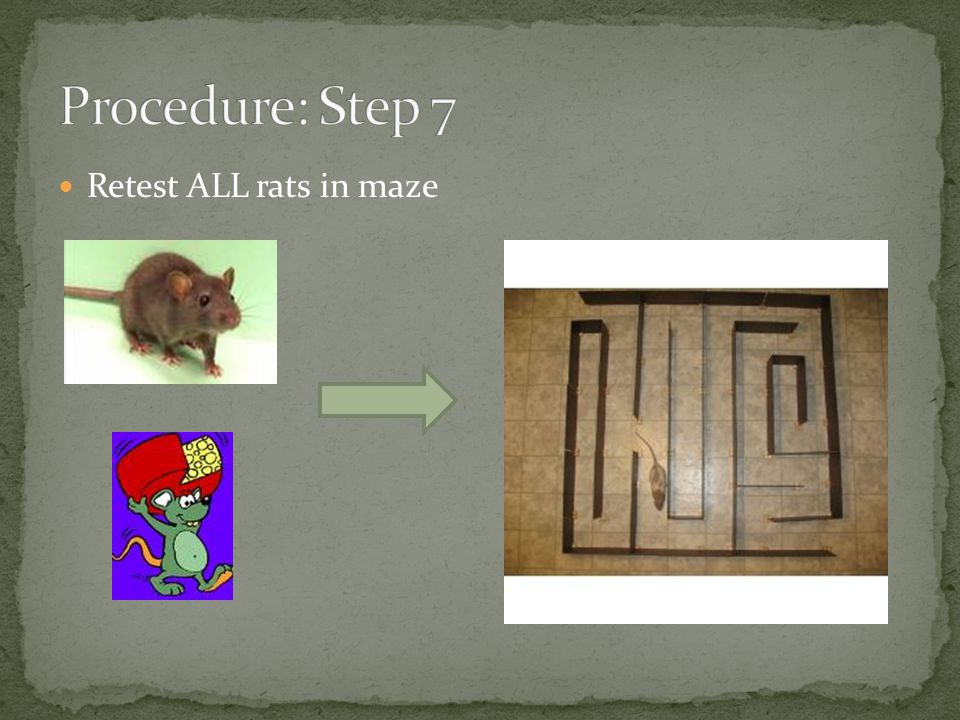 Retest ALL rats in maze
