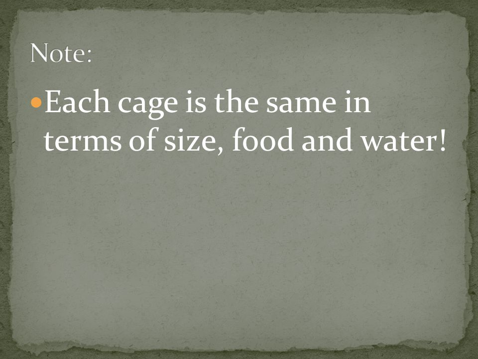 Each cage is the same in terms of size, food and water!