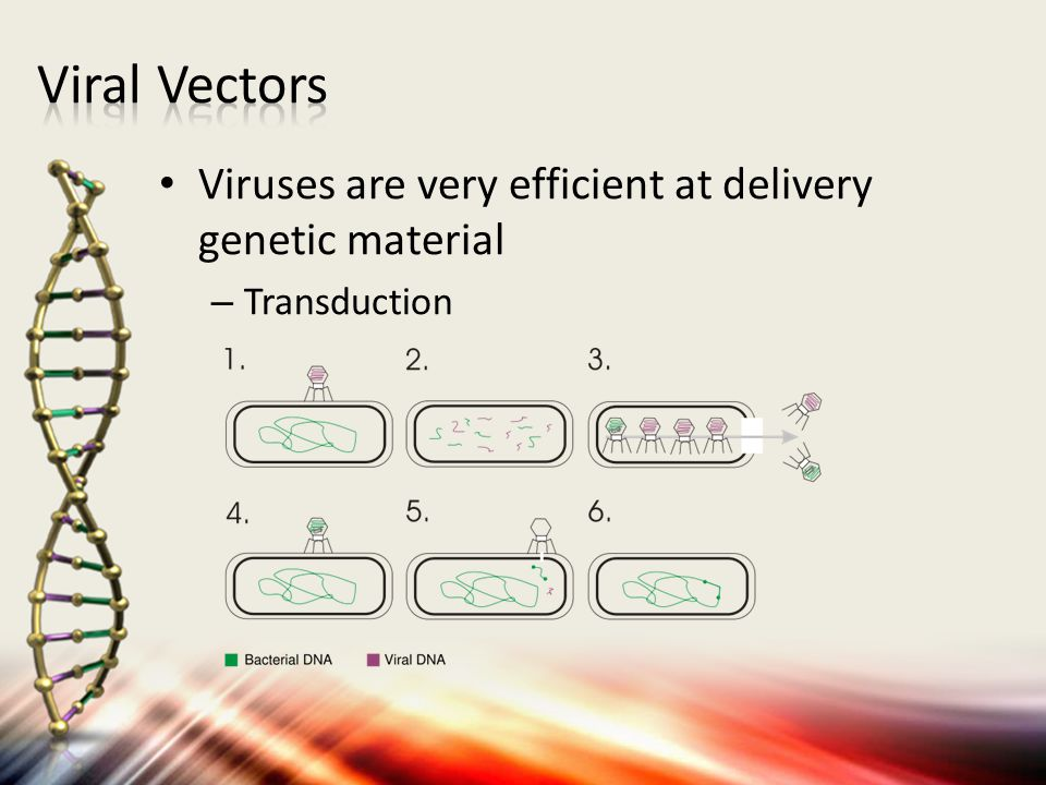 Viruses are very efficient at delivery genetic material – Transduction