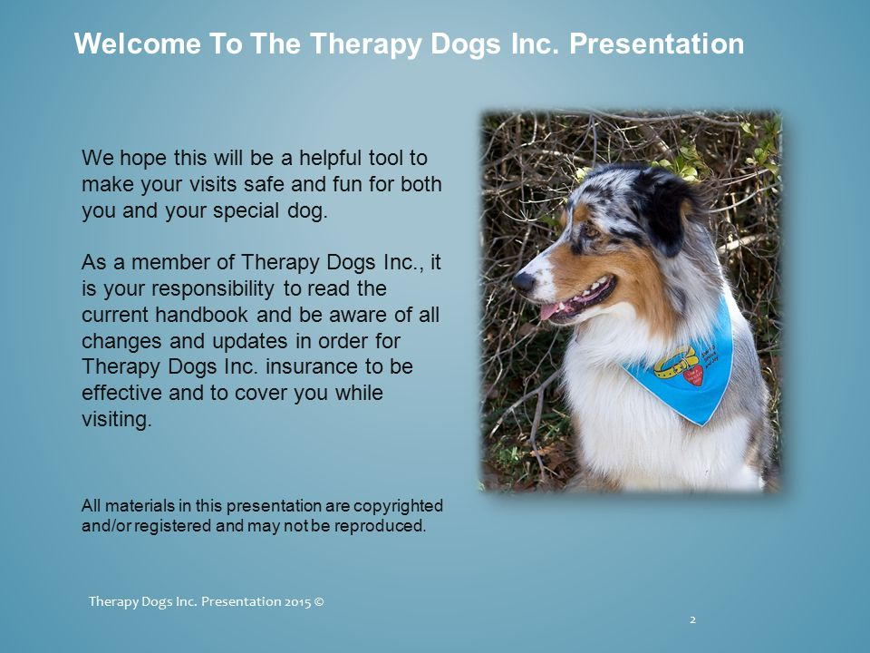 Did You Know...Therapy Dogs Inc. teams are not required to belong to a local group.
