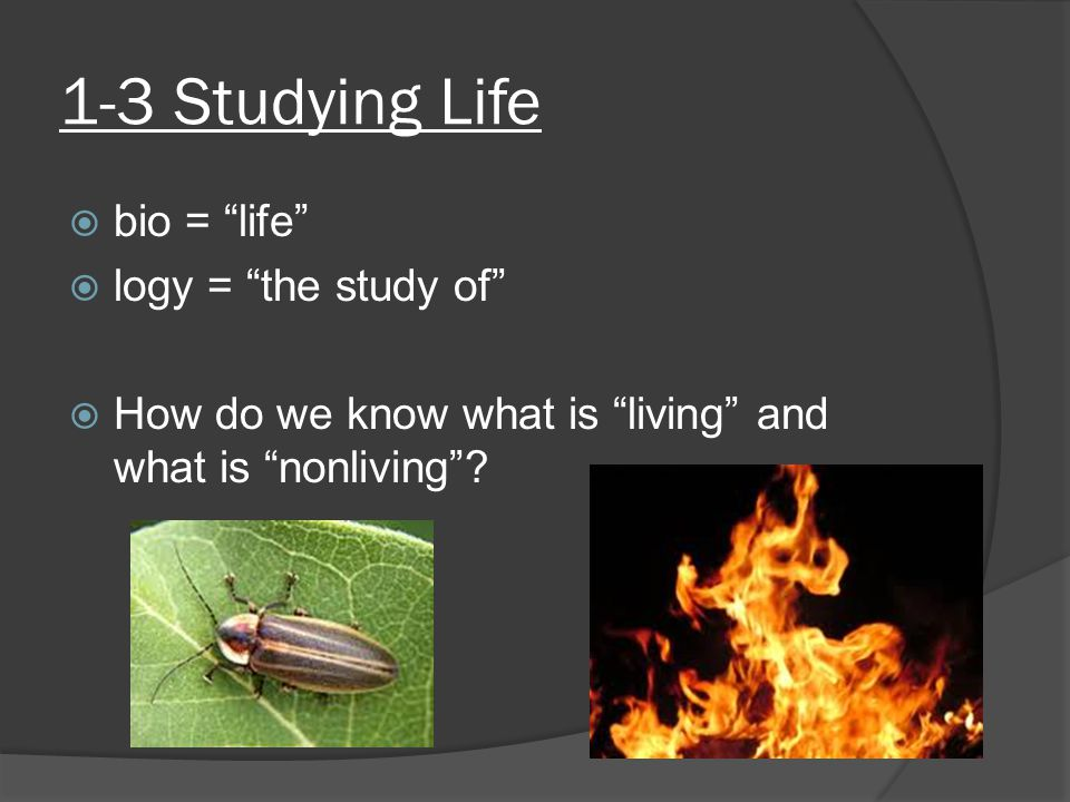 """1-3 Studying Life  bio = """"life""""  logy = """"the study of""""  How do we know what is """"living"""" and what is """"nonliving""""?"""