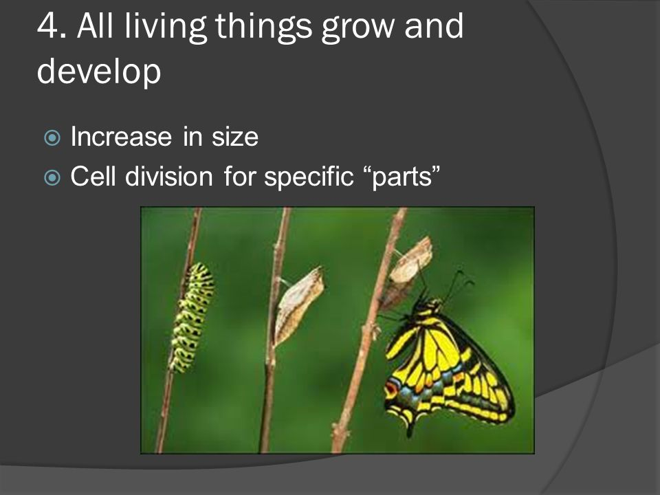 4. All living things grow and develop  Increase in size  Cell division for specific parts