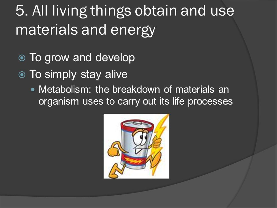 5. All living things obtain and use materials and energy  To grow and develop  To simply stay alive Metabolism: the breakdown of materials an organi