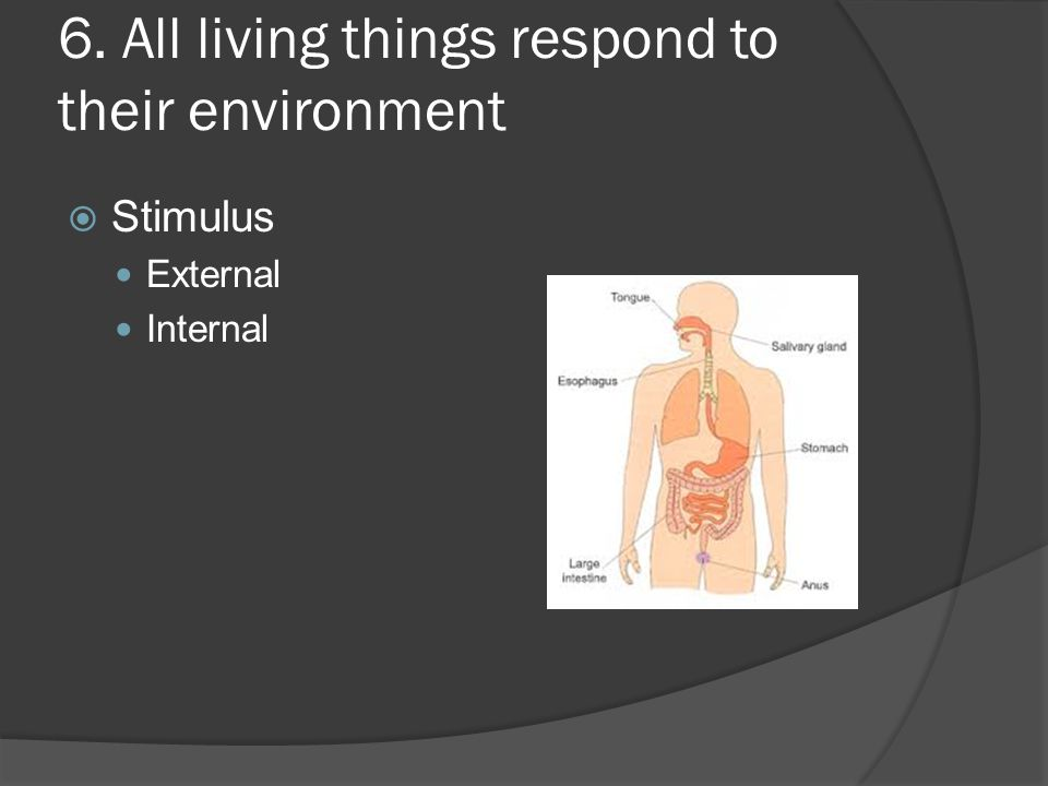 6. All living things respond to their environment  Stimulus External Internal