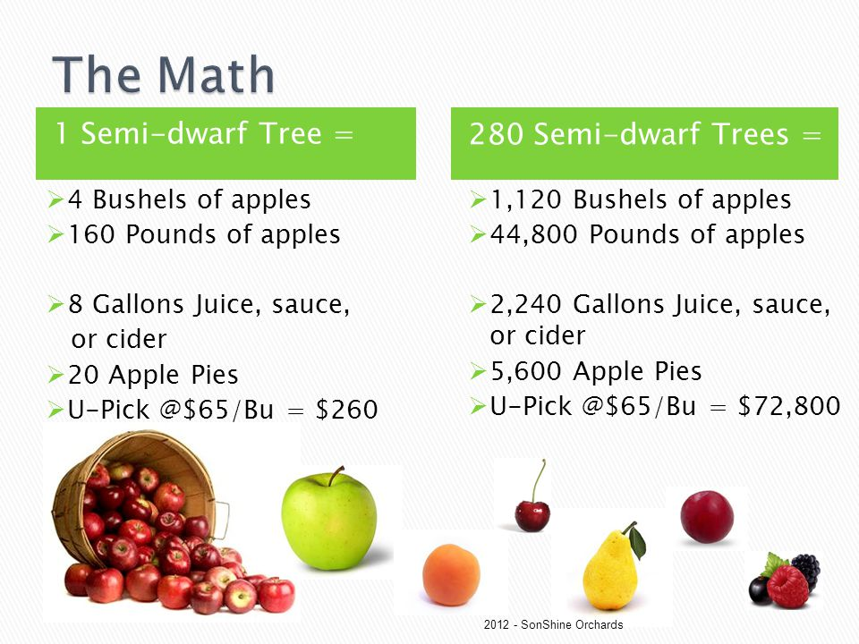1 Semi-dwarf Tree = 1 Semi-Dwarf Apple Tree = Wh 280 Semi-dwarf Trees =  4 Bushels of apples  160 Pounds of apples  8 Gallons Juice, sauce, or cide