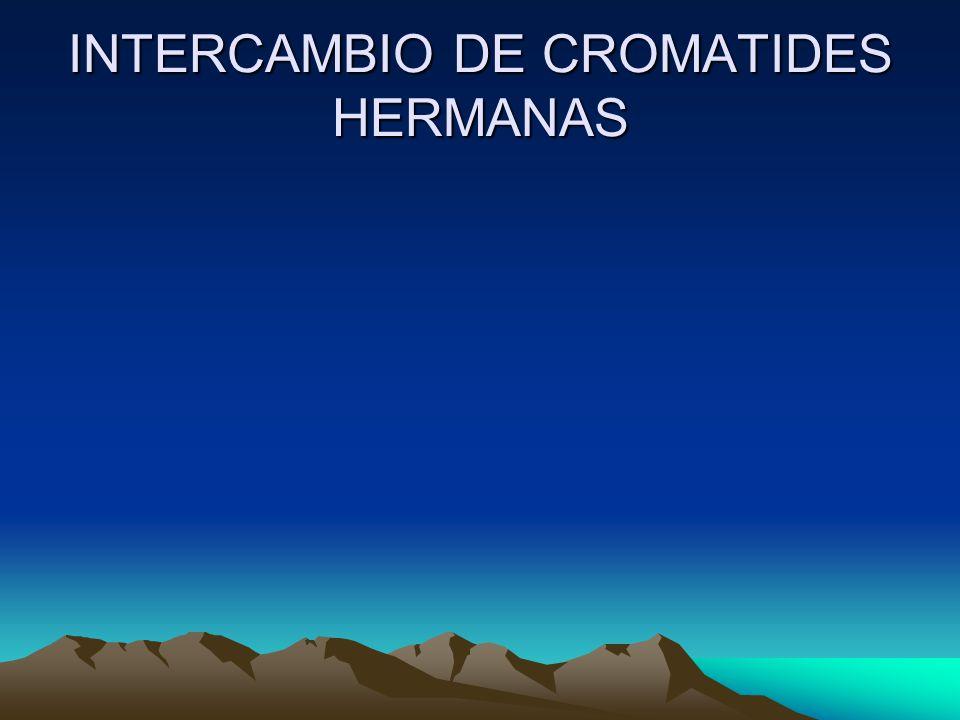 INTERCAMBIO DE CROMATIDES HERMANAS