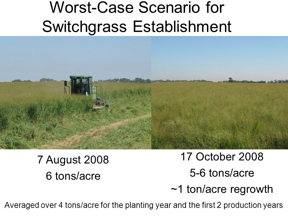 Worst-Case Scenario for Switchgrass Establishment 17 October 2008 5-6 tons/acre ~1 ton/acre regrowth 7 August 2008 6 tons/acre Averaged over 4 tons/ac