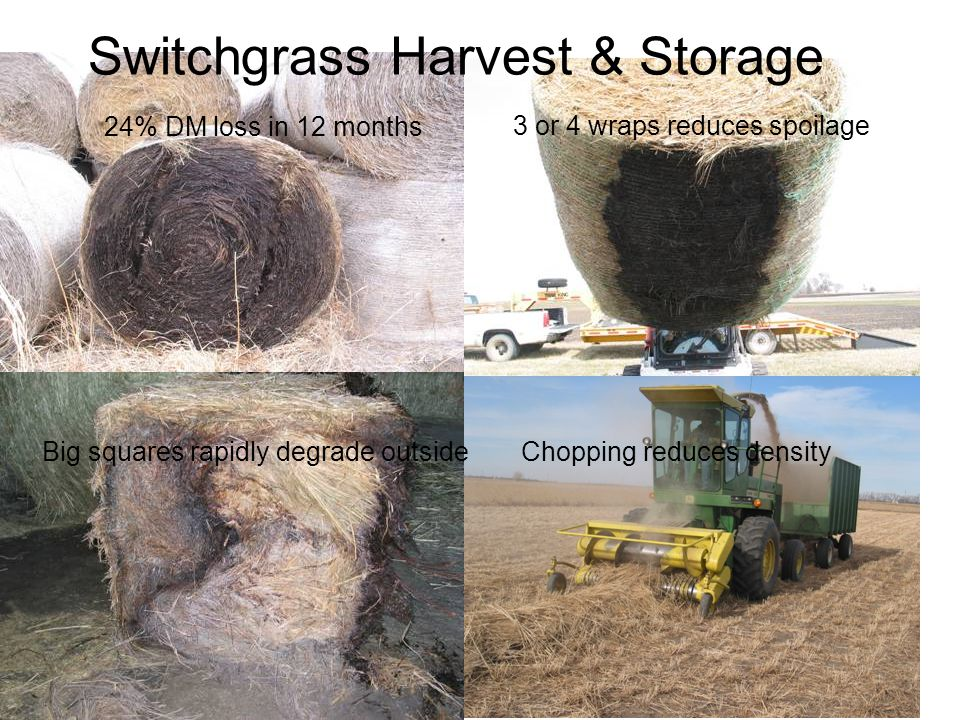 24% DM loss in 12 months 3 or 4 wraps reduces spoilage Chopping reduces densityBig squares rapidly degrade outside Switchgrass Harvest & Storage