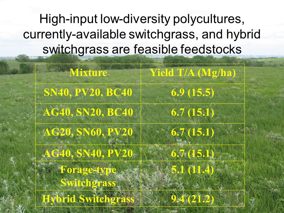 High-input low-diversity polycultures, currently-available switchgrass, and hybrid switchgrass are feasible feedstocks MixtureYield T/A (Mg/ha) SN40,