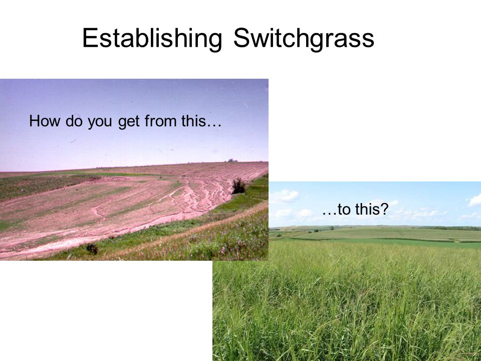 …to this? How do you get from this… Establishing Switchgrass
