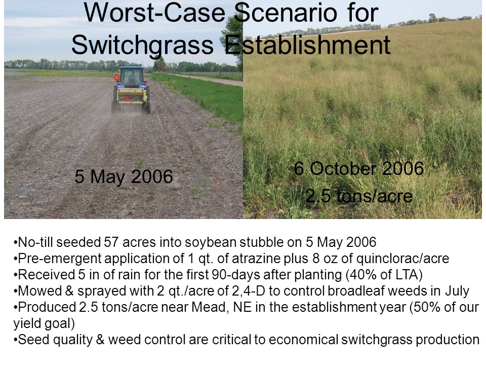 No-till seeded 57 acres into soybean stubble on 5 May 2006 Pre-emergent application of 1 qt. of atrazine plus 8 oz of quinclorac/acre Received 5 in of