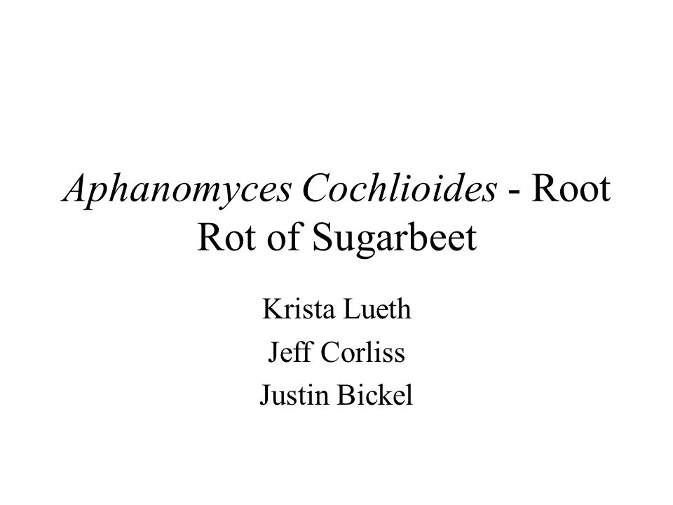 Aphanomyces Cochlioides - Root Rot of Sugarbeet Krista Lueth Jeff Corliss Justin Bickel