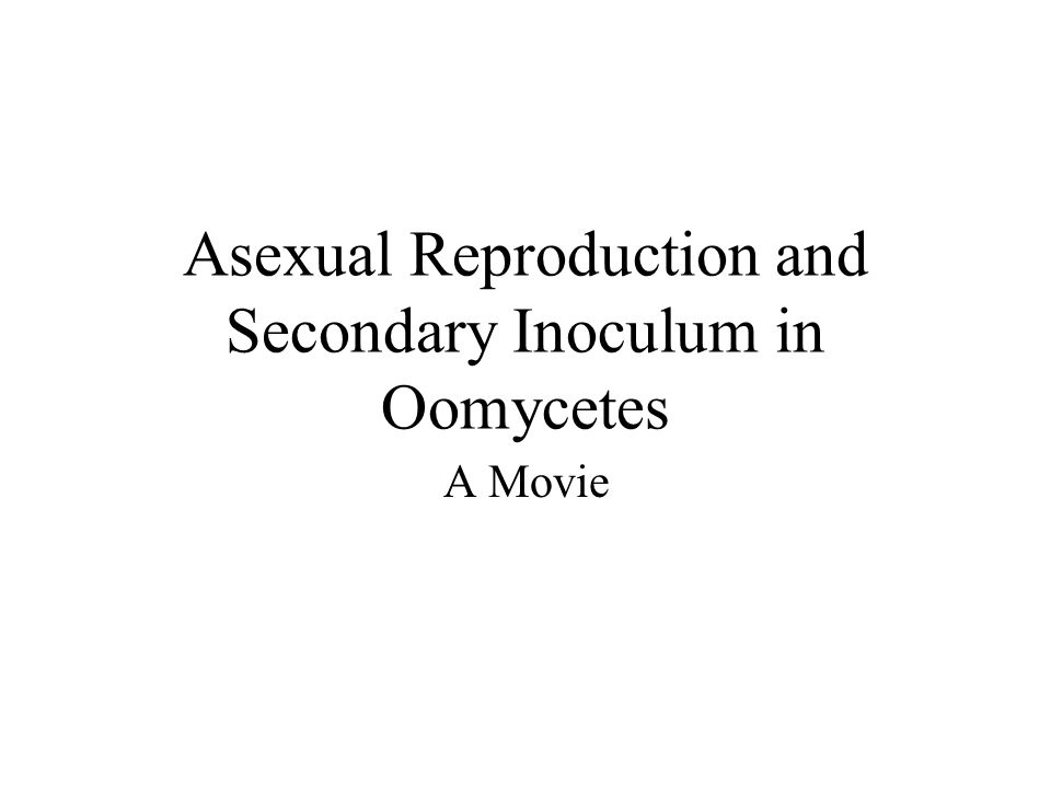 Asexual Reproduction and Secondary Inoculum in Oomycetes A Movie