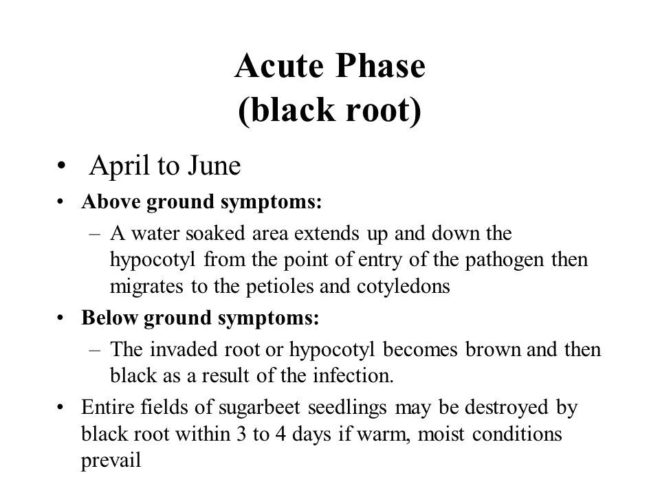 Acute Phase (black root) April to June Above ground symptoms: –A water soaked area extends up and down the hypocotyl from the point of entry of the pa