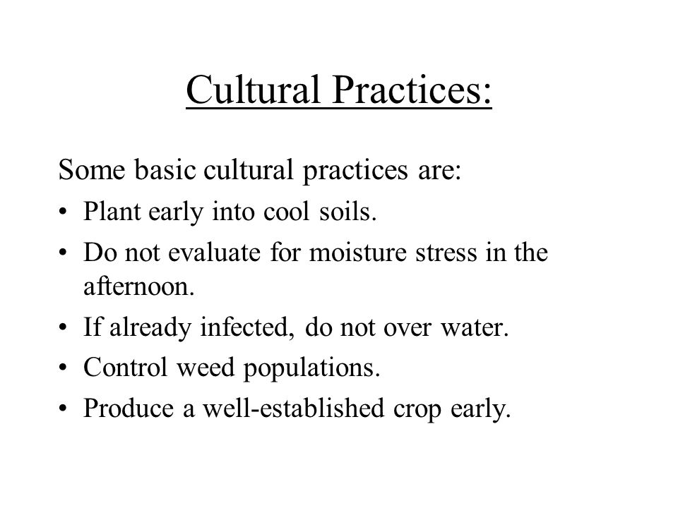 Cultural Practices: Some basic cultural practices are: Plant early into cool soils. Do not evaluate for moisture stress in the afternoon. If already i