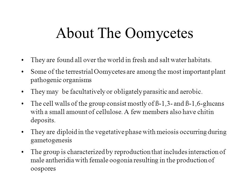 About The Oomycetes They are found all over the world in fresh and salt water habitats. Some of the terrestrial Oomycetes are among the most important