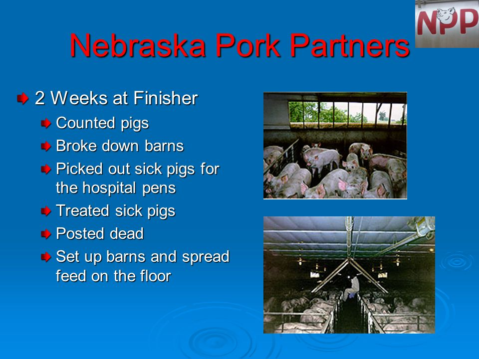 Nebraska Pork Partners 2 Weeks at Finisher Counted pigs Broke down barns Picked out sick pigs for the hospital pens Treated sick pigs Posted dead Set up barns and spread feed on the floor
