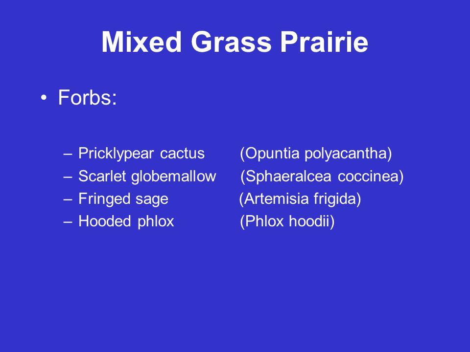 Mixed Grass Prairie Forbs: –Pricklypear cactus (Opuntia polyacantha) –Scarlet globemallow (Sphaeralcea coccinea) –Fringed sage (Artemisia frigida) –Hooded phlox (Phlox hoodii)