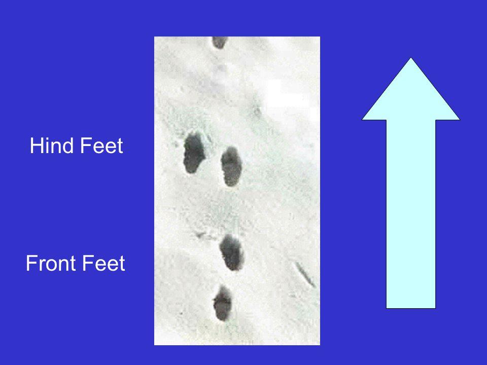 Hind Feet Front Feet
