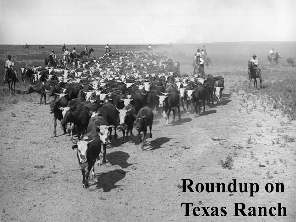 Roundup on Texas Ranch