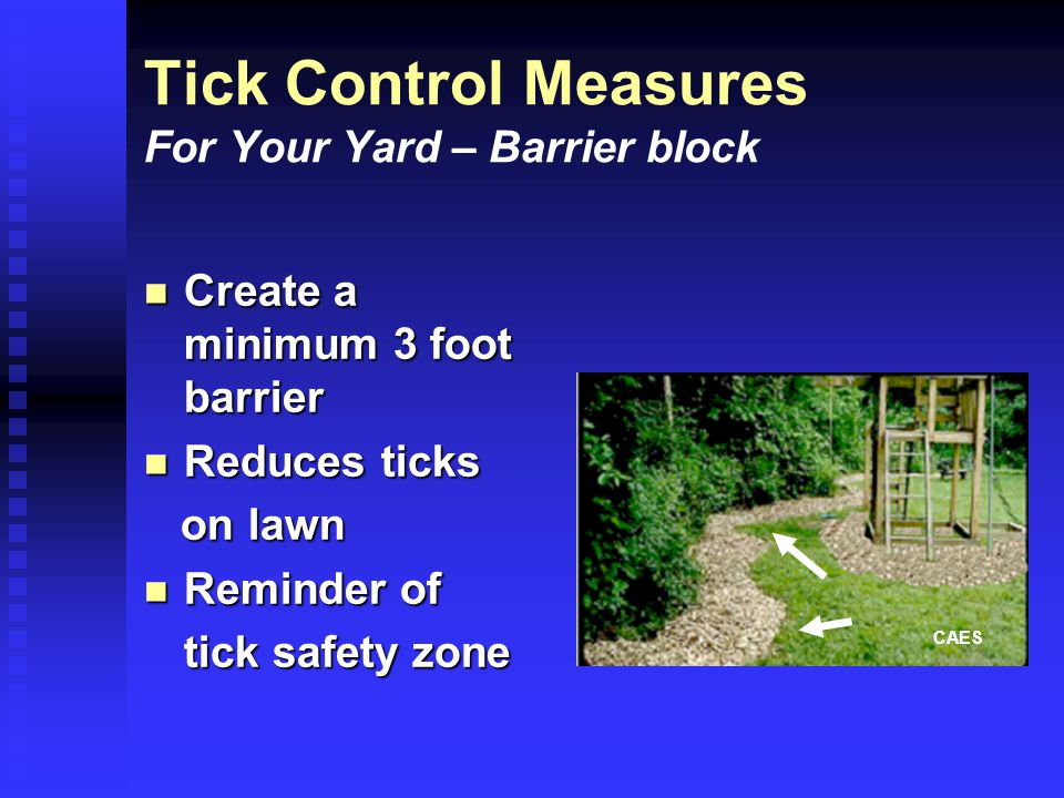 Tick Control Measures For Your Yard – Barrier block Create a minimum 3 foot barrier Create a minimum 3 foot barrier Reduces ticks Reduces ticks on lawn on lawn Reminder of Reminder of tick safety zone CAES