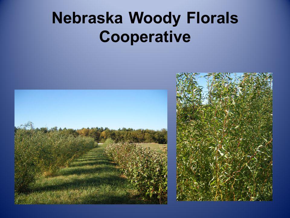 Nebraska Woody Florals Cooperative Stem Varieties
