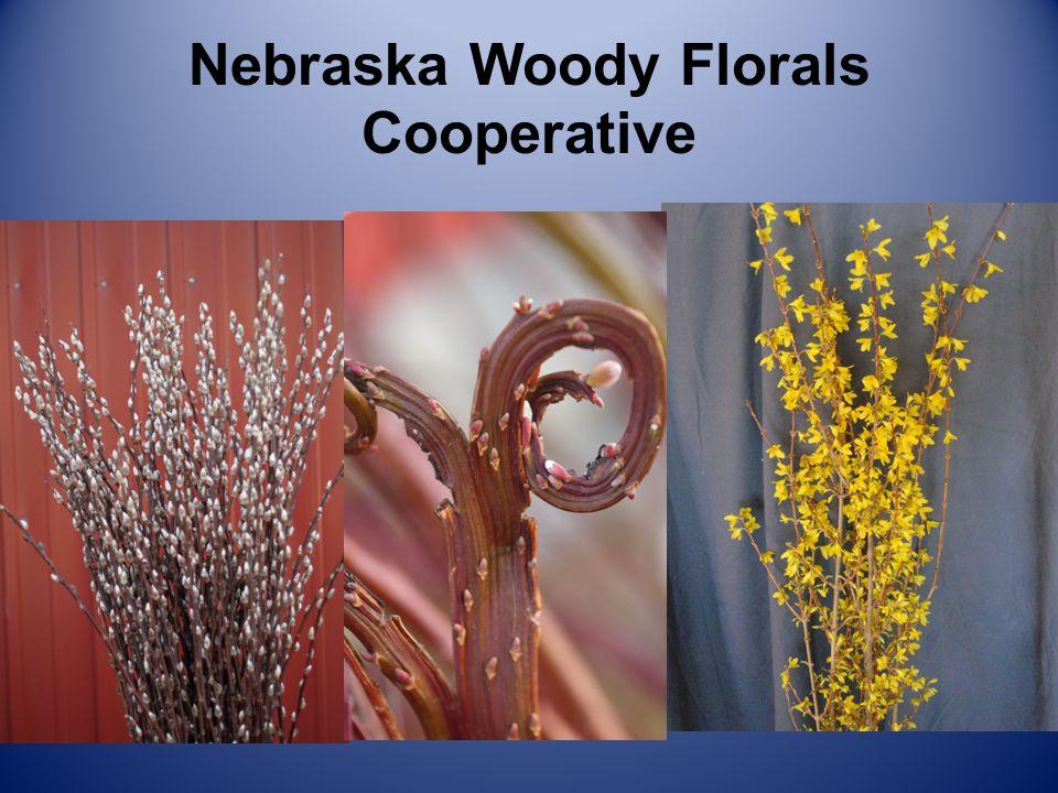 Nebraska Woody Florals Cooperative Willows
