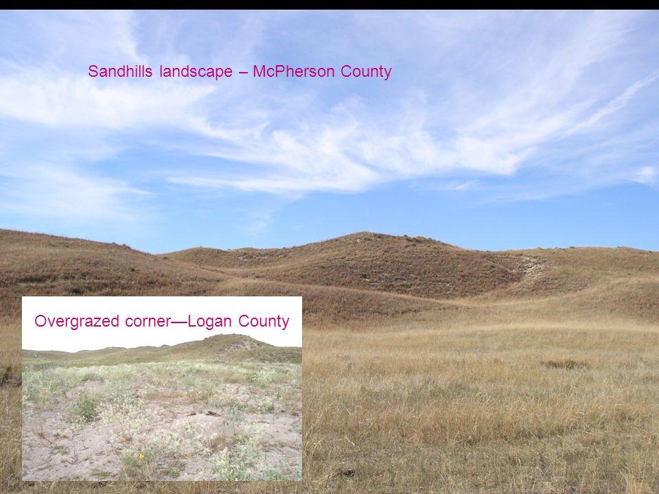 Sandhills landscape – McPherson County Overgrazed corner—Logan County
