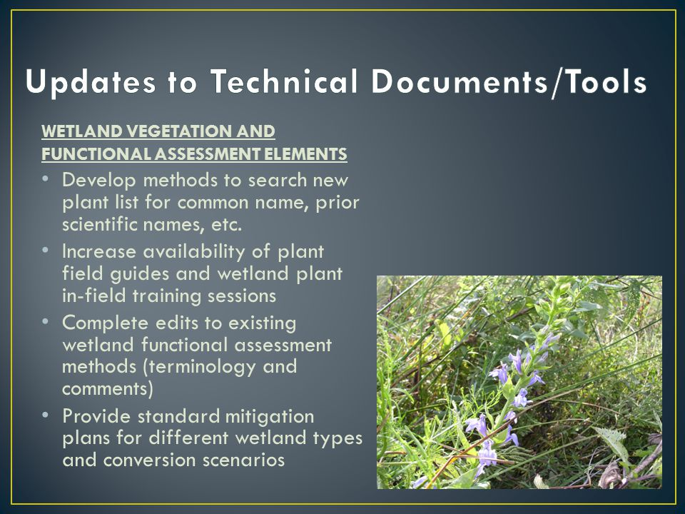 WETLAND VEGETATION AND FUNCTIONAL ASSESSMENT ELEMENTS Develop methods to search new plant list for common name, prior scientific names, etc.