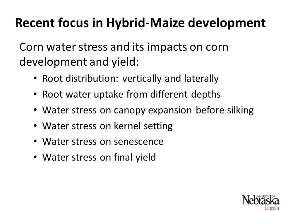 Recent focus in Hybrid-Maize development Corn water stress and its impacts on corn development and yield: Root distribution: vertically and laterally Root water uptake from different depths Water stress on canopy expansion before silking Water stress on kernel setting Water stress on senescence Water stress on final yield