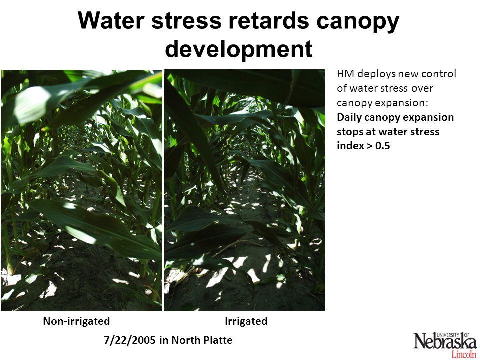 Water stress retards canopy development 7/22/2005 in North Platte Non-irrigatedIrrigated HM deploys new control of water stress over canopy expansion: Daily canopy expansion stops at water stress index > 0.5