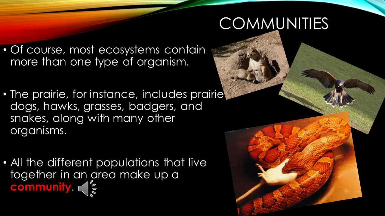POPULATIONS The area in which a population lives can be as small as a single blade of grass or as large as the whole planet.