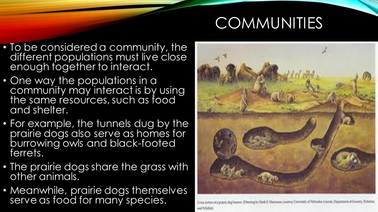 COMMUNITIES The smallest unit of organization is a single organism The organism belongs to a population of other members of its species.