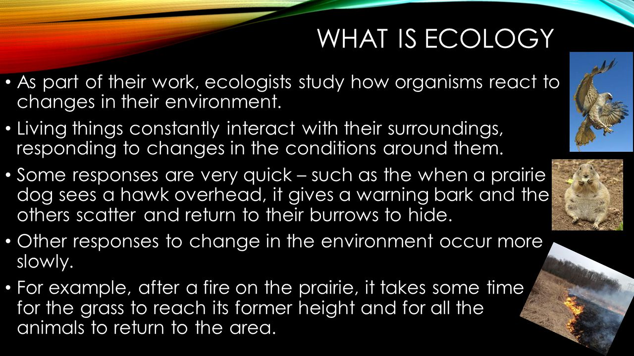 WHAT IS ECOLOGY Because the populations in the prairie ecosystem interact with one another, any changes in a community affect all the different populations that live there.