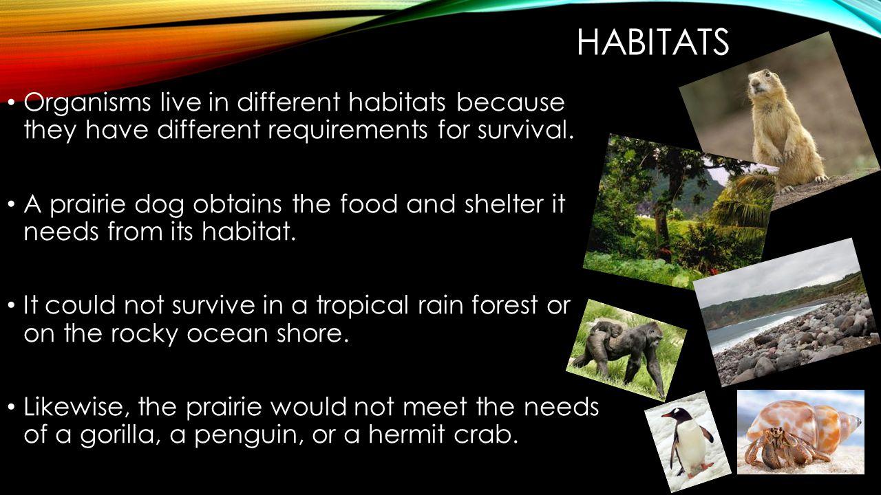 HABITATS A single ecosystem may contain many habitats.