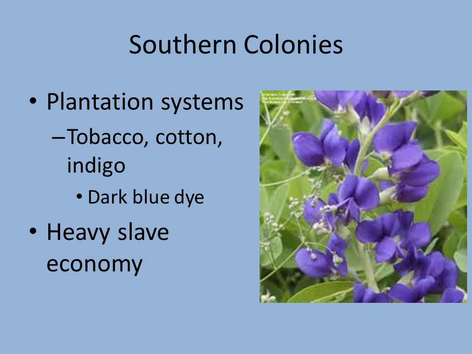 Southern Colonies Plantation systems – Tobacco, cotton, indigo Dark blue dye Heavy slave economy