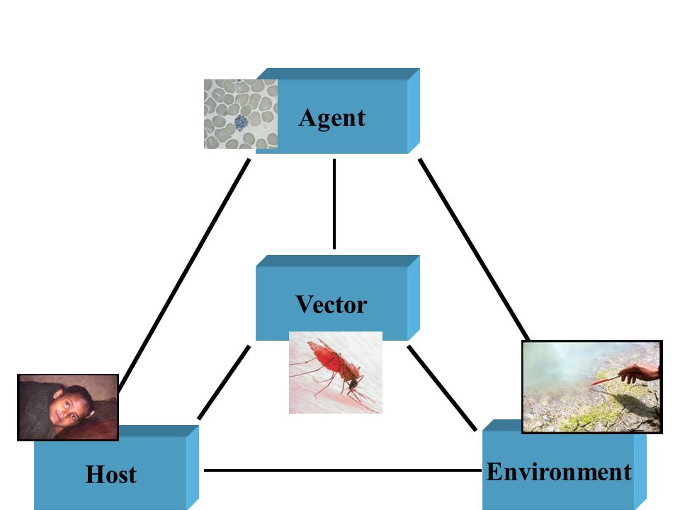 Agent Host Environment Vector Factors involved in the Natural History of Disease