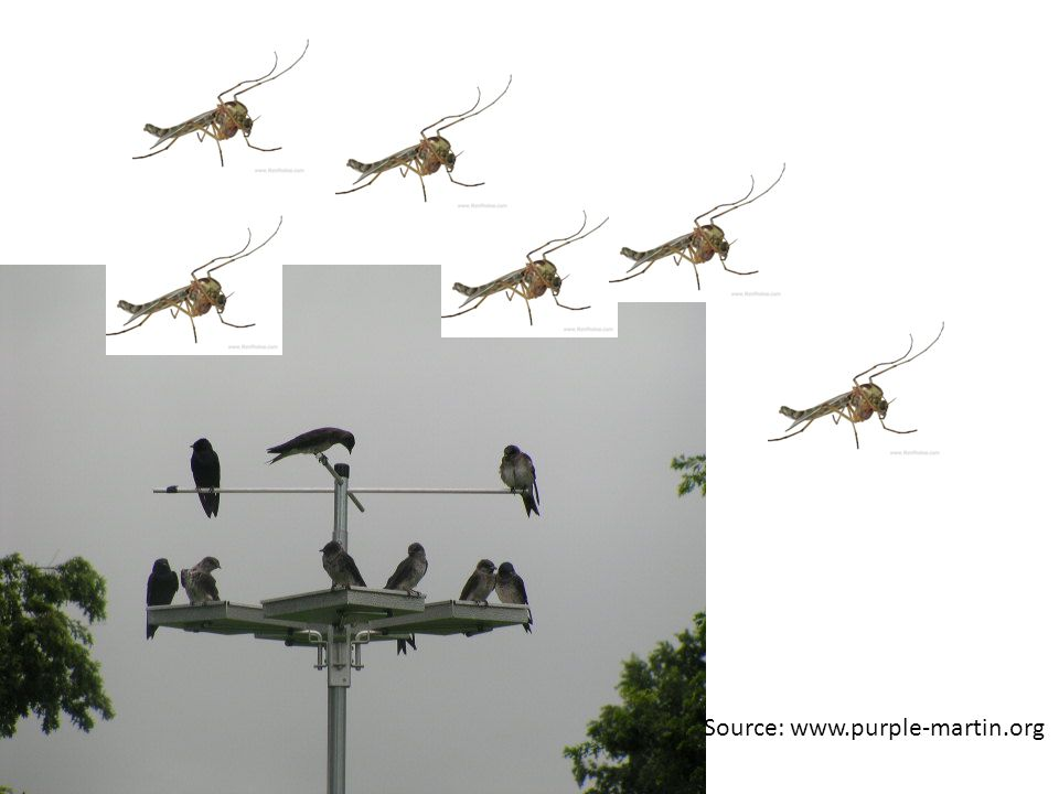 Source: www.purple-martin.org