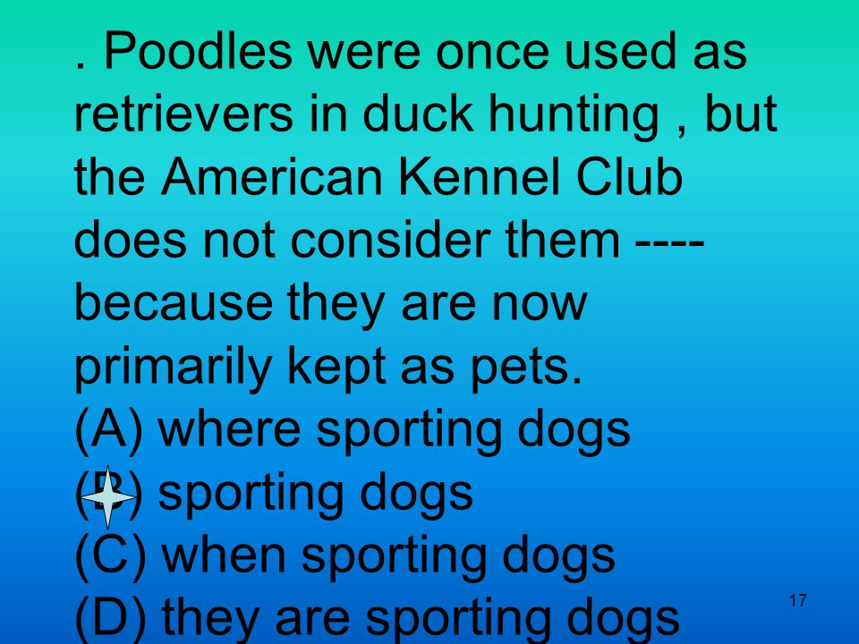 17. Poodles were once used as retrievers in duck hunting, but the American Kennel Club does not consider them ---- because they are now primarily kept