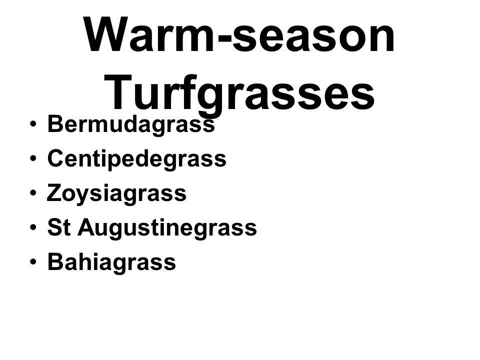 Warm-season Turfgrasses Bermudagrass Centipedegrass Zoysiagrass St Augustinegrass Bahiagrass