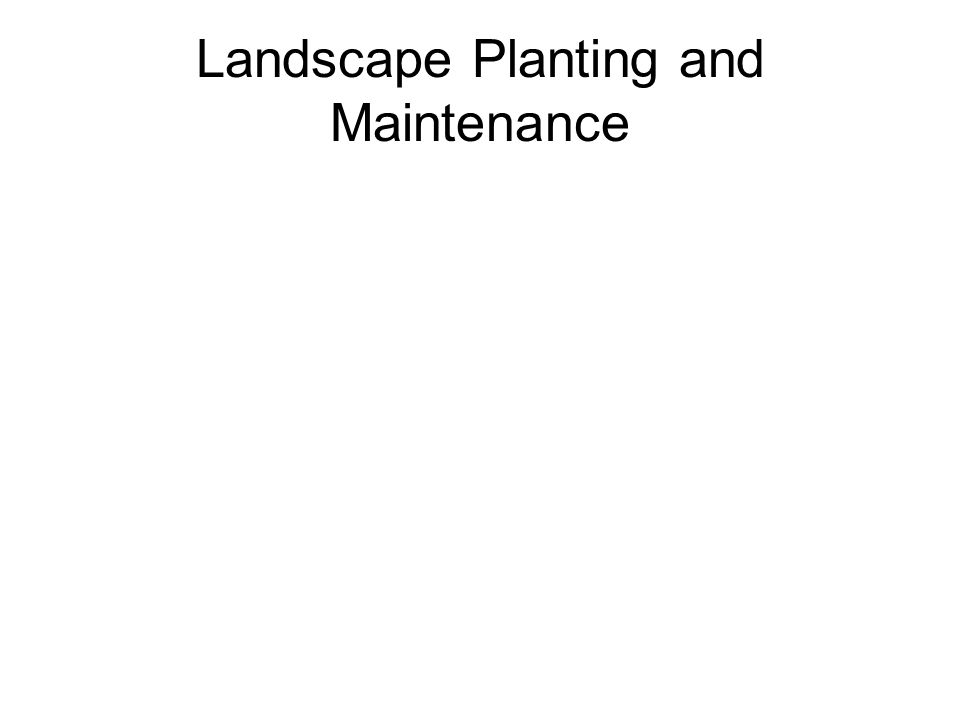 Landscape Planting and Maintenance