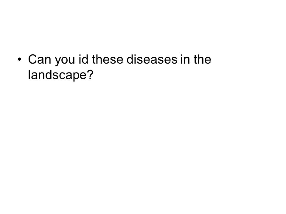 Can you id these diseases in the landscape?
