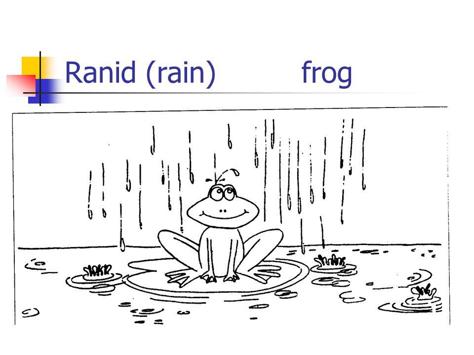 Ranid (rain) frog
