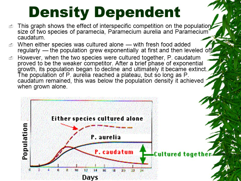 Density Dependent  This graph shows the effect of interspecific competition on the population size of two species of paramecia, Paramecium aurelia and Paramecium caudatum.