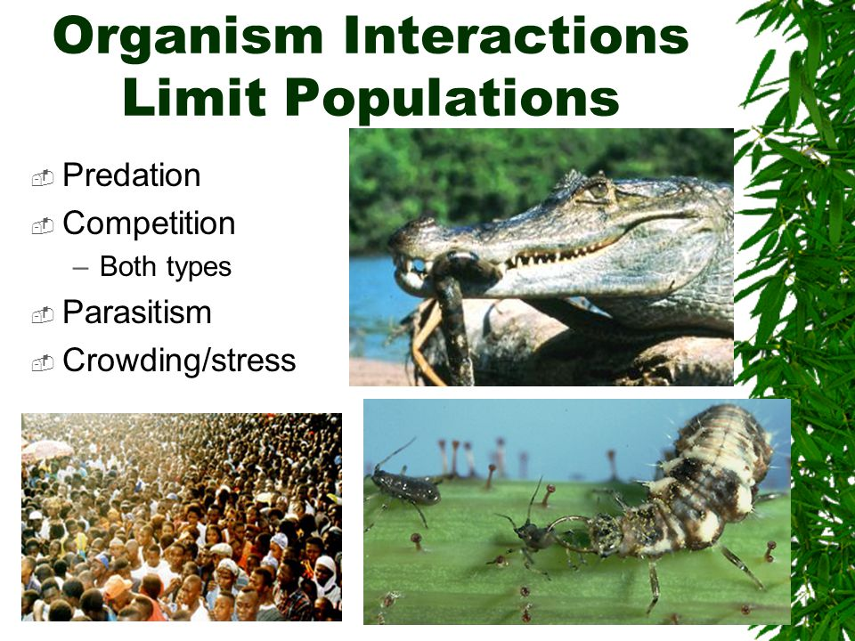 Organism Interactions Limit Populations  Predation  Competition –Both types  Parasitism  Crowding/stress