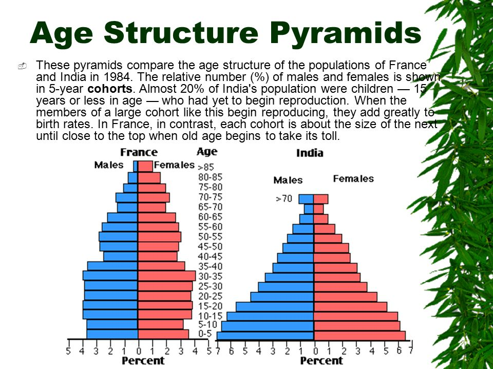 Age Structure Pyramids  These pyramids compare the age structure of the populations of France and India in 1984.