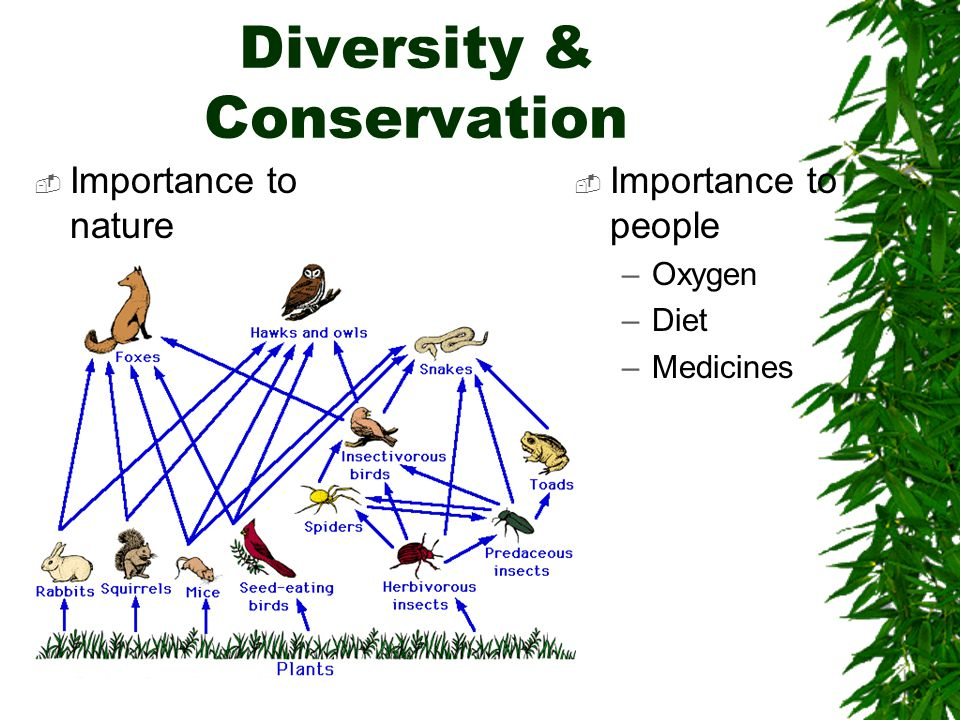 Diversity & Conservation  Importance to nature  Importance to people –Oxygen –Diet –Medicines