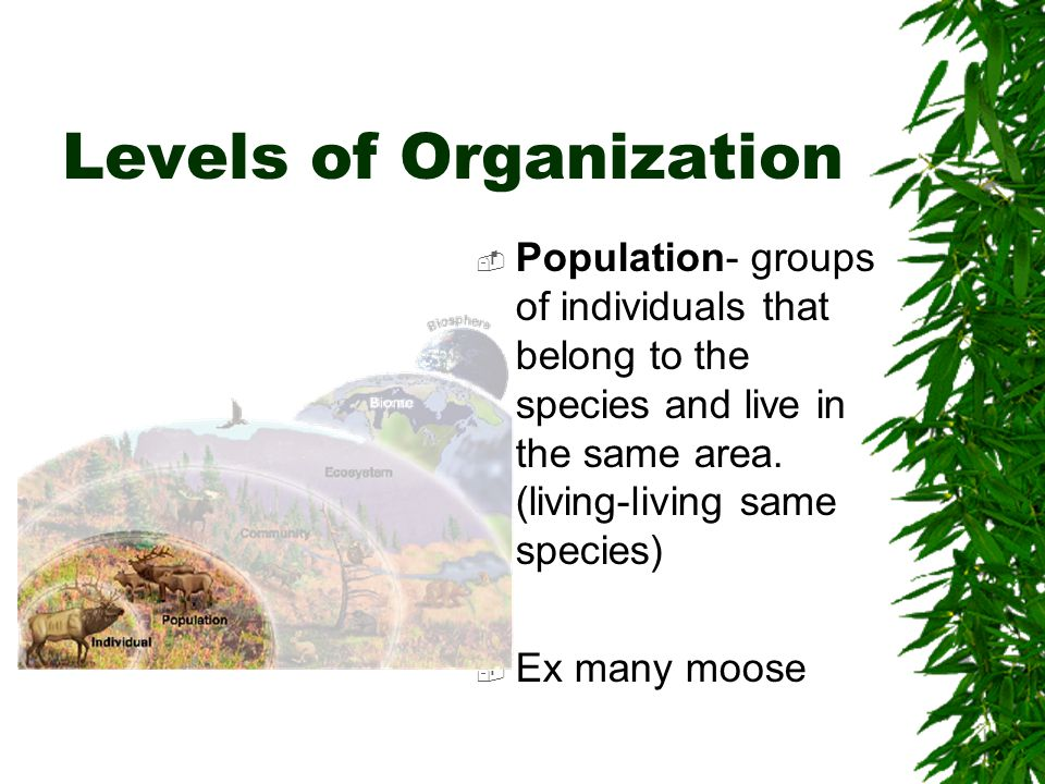 Levels of Organization  Population- groups of individuals that belong to the species and live in the same area.
